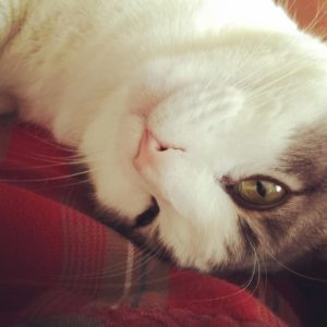 Otis the Cat upside down