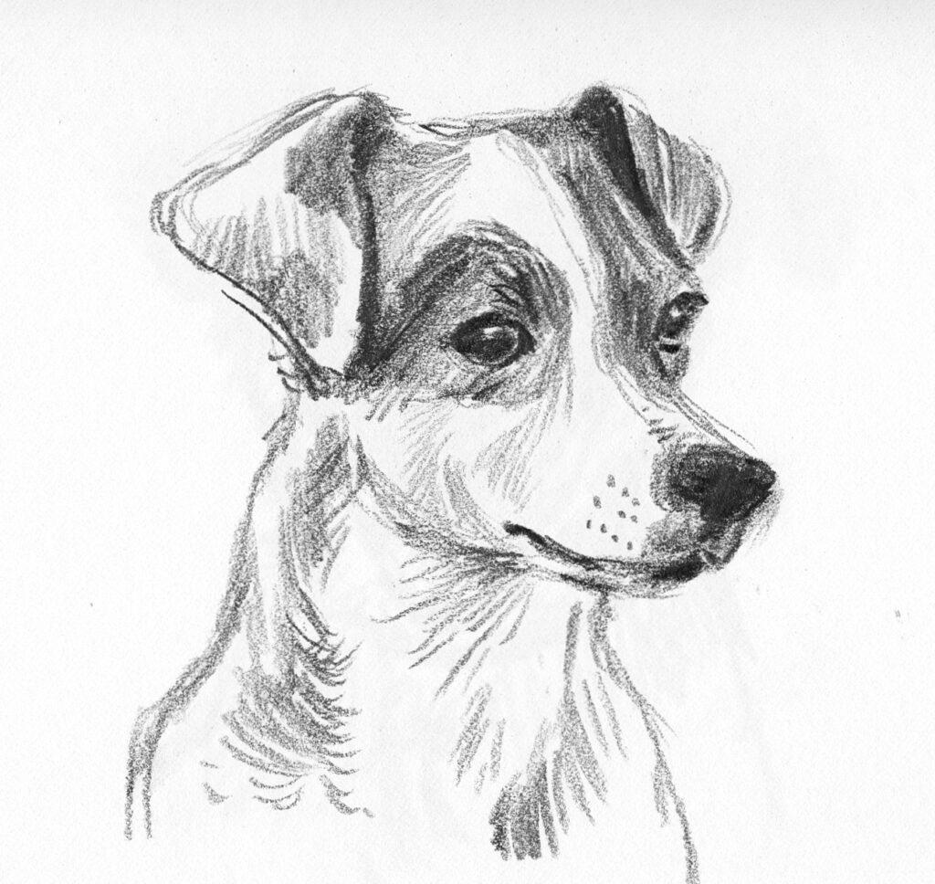 Dog sketch 2