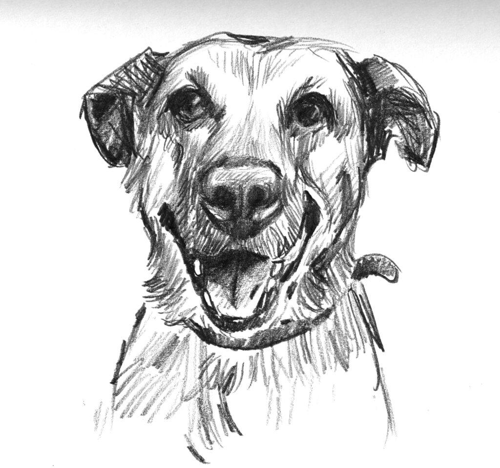 Dog sketch 3