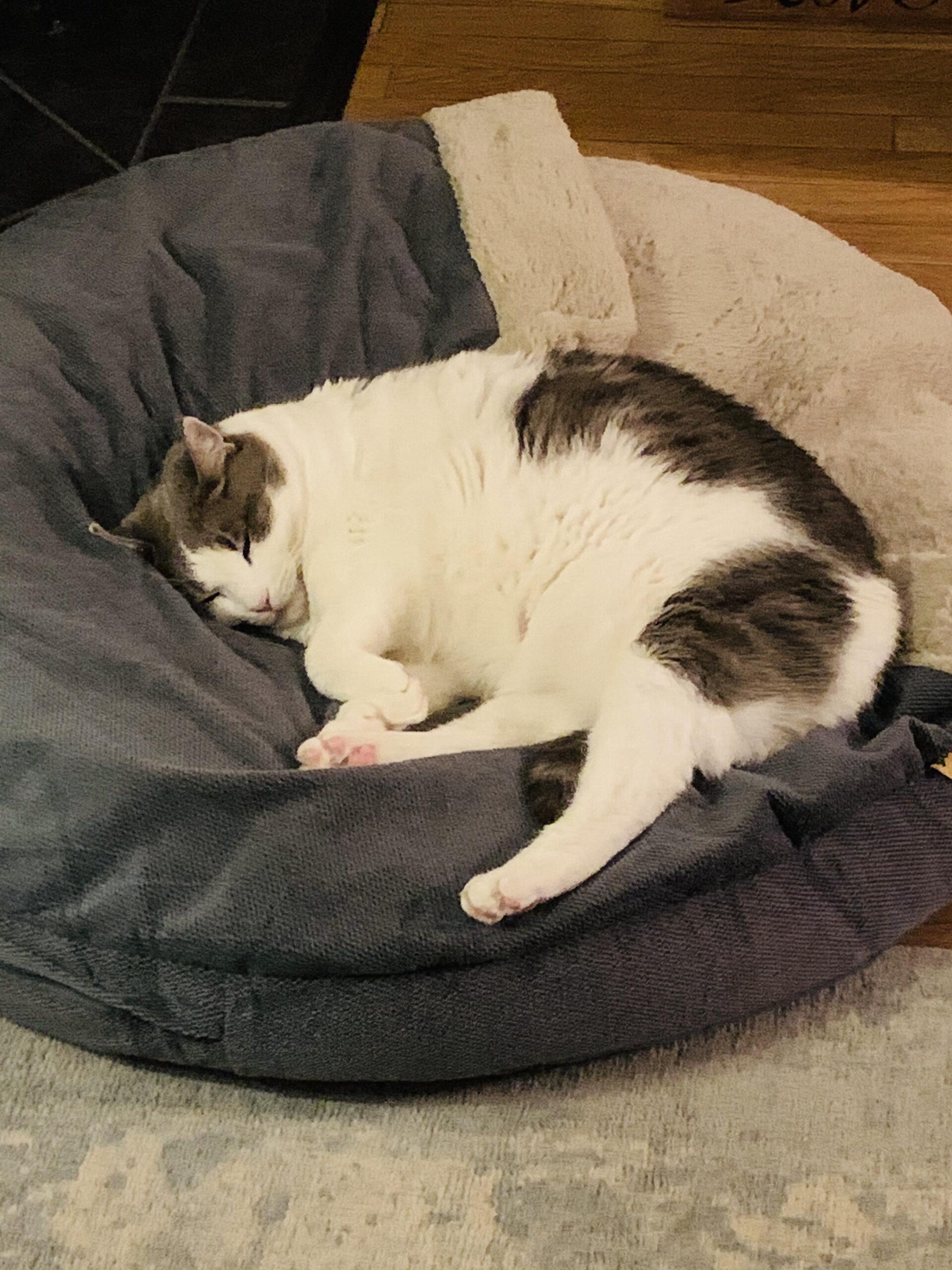 Otis on the dog bed